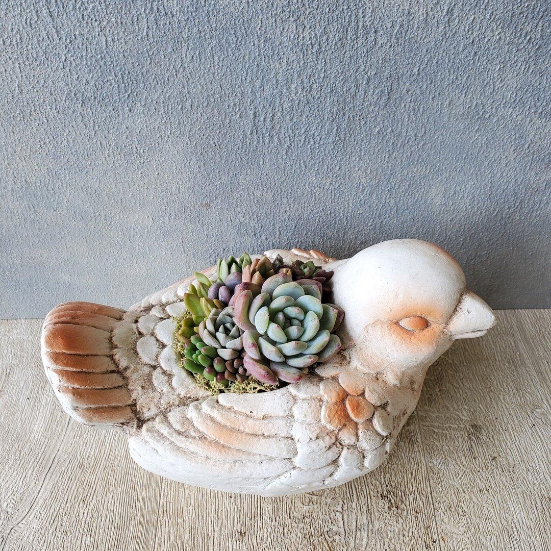 多肉寄せ植え 小鳥鉢
