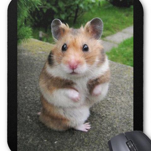 ゴールデンハムスターのマウスパッド:フォトパッド( ハムスターシリーズ )