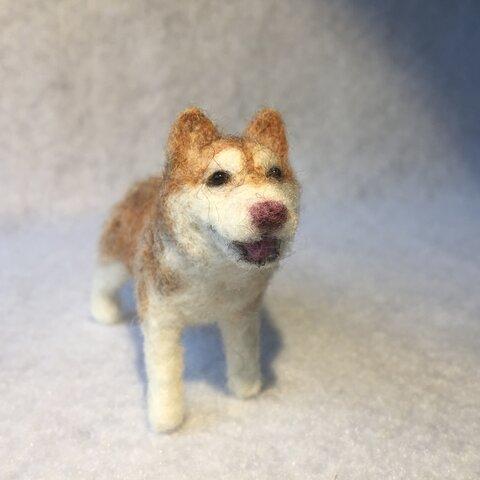 フェルト犬 シベリアンハスキー ベニさん <MW342>