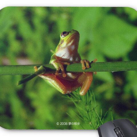 ニホンアマガエルのマウスパッド:フォトパッド(世界のカエルシリーズ)