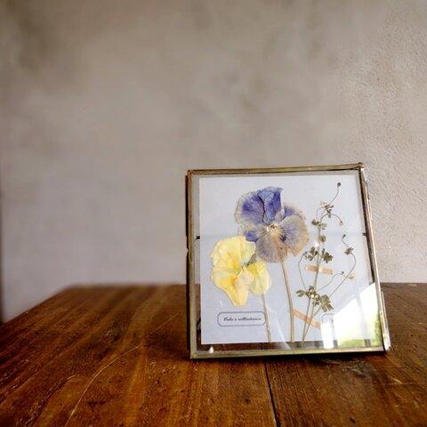植物標本 ■押し花フレーム■パンジーとオニタラビコ A