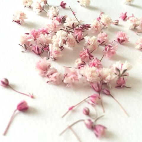 【人気】☆かすみ草*ドライフラワー*桜色☆