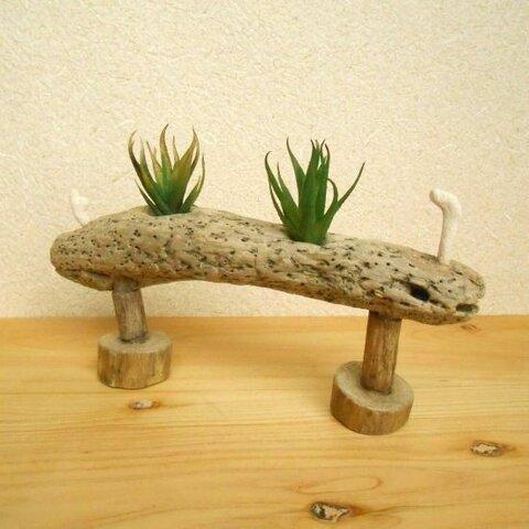 【温泉流木】2本の足とサンゴがかわいいナマコ型海流木のグリーンスタンド エアープランツスタンド 流木インテリア