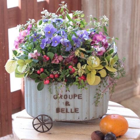 ビオラの荷車ブリキ花束植え