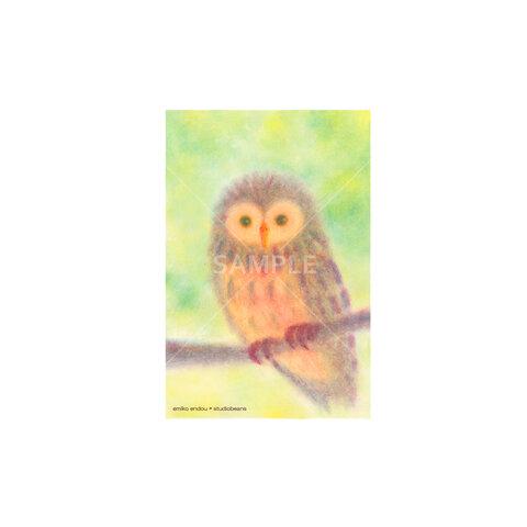 【選べるポストカード5枚セット】No.158 ふくろう2