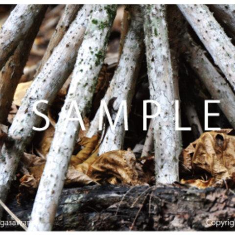 はがきサイズの写真:世界自然遺産 迷彩とかげ POSTCARD