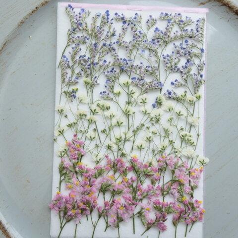 押し花ブルーファンタジア 、かすみ草とスターチス
