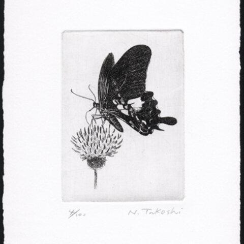 蝶とアザミ / 銅版画 (作品のみ)
