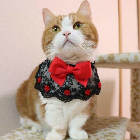 猫服 ケープ(明るい赤色)