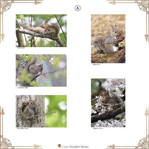 かわいいリスのポストカード10枚セット A.B