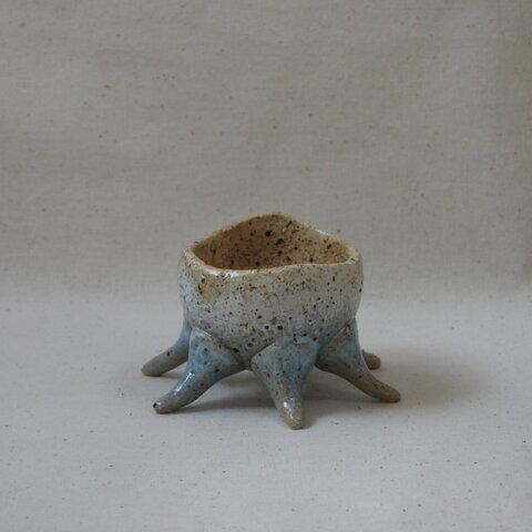 空色蛸足豆植木鉢(1)