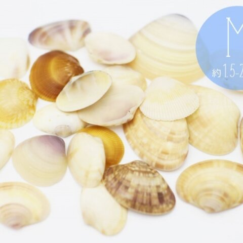 【ミニチュアパーツ】 海からの贈り物 二枚貝 シェル 天然素材 Mサイズ 約1.5〜3.0cm  24枚+おまけ6枚