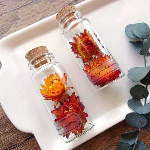 植物標本 Botanical Collection■No.1 ヘリクリサム ナチュラル オレンジブラウン
