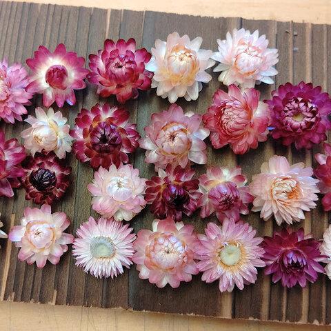お得♪サイズ色々 ピンク&パープル系ヘリクリサムヘッドのみ ドライフラワー花材セット