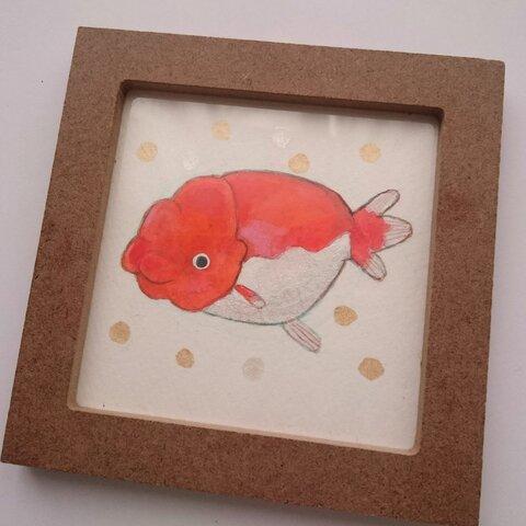 ミニ原画(金魚)1 らんちゅう