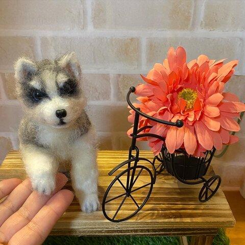 羊毛フェルト シベリアンハスキー子犬 おて