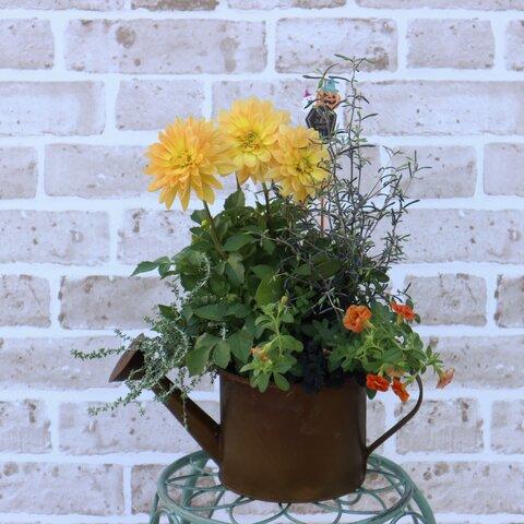 ダークブラウンのブリキ鉢にハロウィンカラー🎃の寄せ植え オレンジ