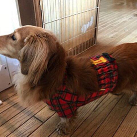 【受注製作】ミニチュアダックス・小型犬用泥除け袖付きお散歩用エプロン