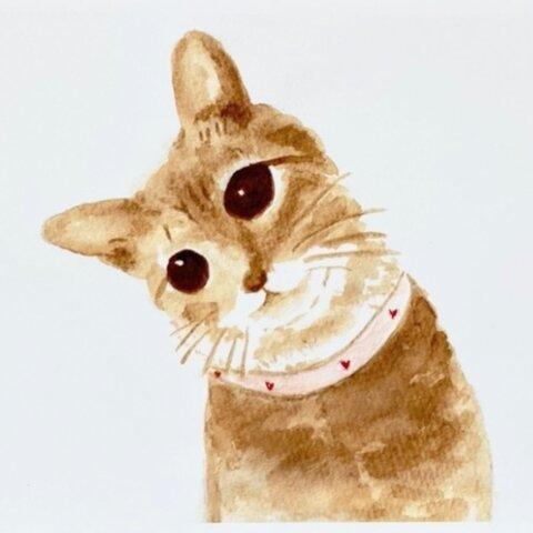 コーヒー で描いています『やさしい気持ちに』 ポストカード 猫 ねこ ペット コーヒー画 秋 アート 絵 イラスト 水彩画 ハガキ 【選べる2枚】