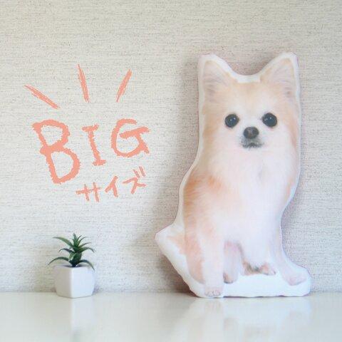 ビッグサイズ 犬 猫 ペット 動物 チワワ クッション ぬいぐるみ インテリア メモリアル プレゼント オーダーメイド 画像 写真 名前 無地n