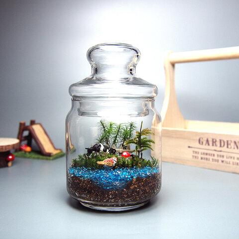 【苔テラリウム・手作りキット一式】ガラスポット