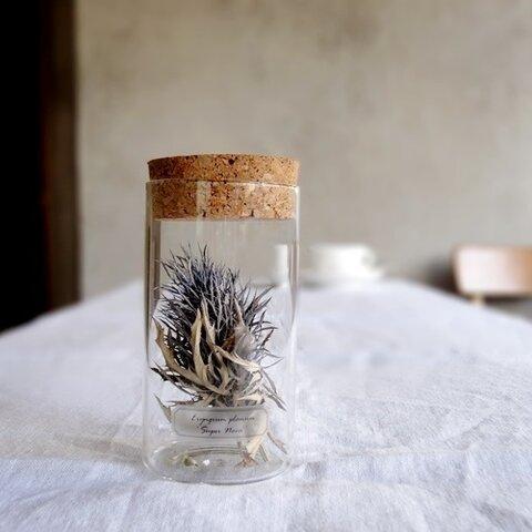 植物標本 Botanical Collection■Lサイズボトル■ No.L-20 エリンジューム