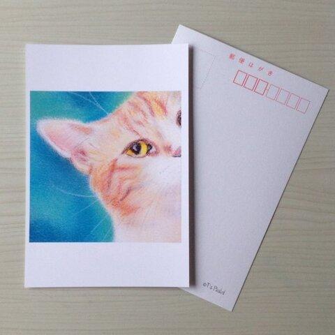 27ポストカード チラ見猫 6枚セット