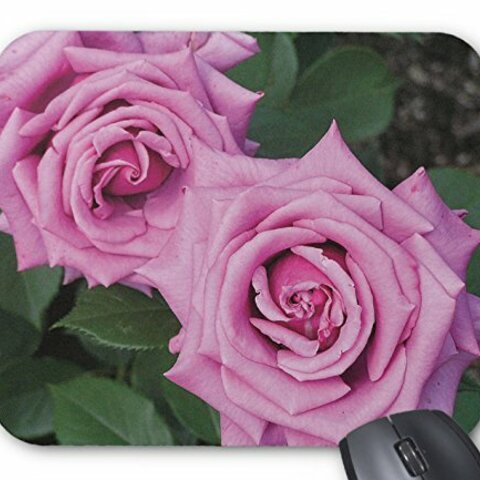 ピンクのバラのマウスパッド:フォトパッド( 世界の花シリーズ ) (B:紫雲)