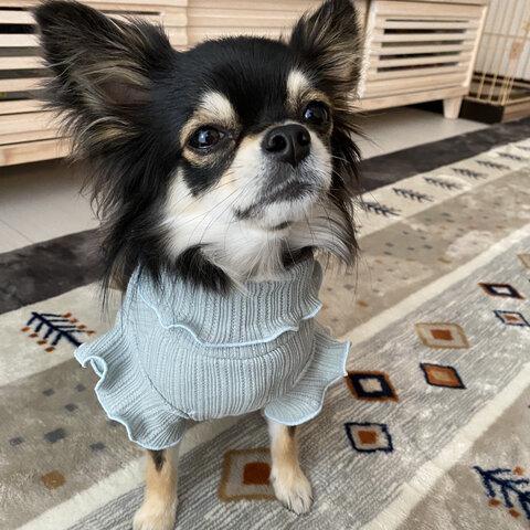 【ブルーグレー】再販 犬服 フリル袖タンクトップ 春 夏 小型犬