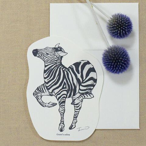 動物カード+封筒セット【グラントシマウマ】