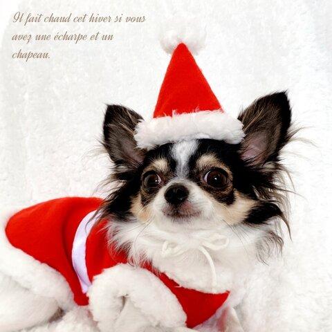 犬服 夢見るサンタさん帽子 犬帽子 犬コスプレ 犬クリスマス  犬服クリスマス 犬服サンタ 犬サンタ