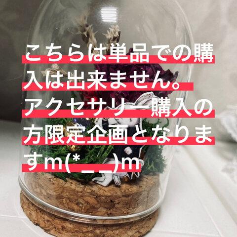 ☆。.:*・゜10月限定ご購入者様限定企画☆。.:*・゜