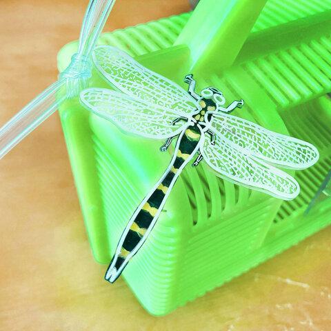 夏休みの昆虫採集、オニヤンマ