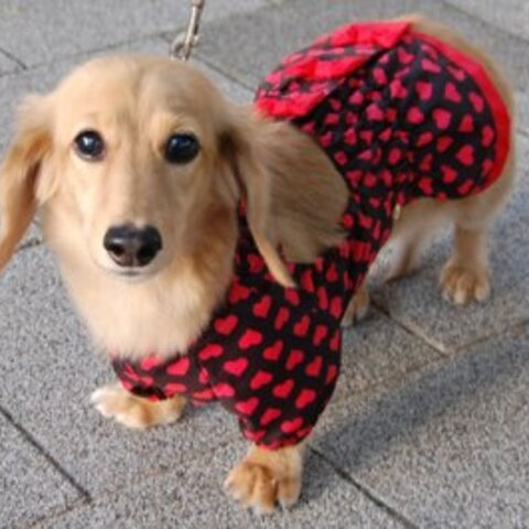 【受注製作】ミニチュアダックス・小型犬用泥除け袖付きお散歩用エプロンスカートタイプ