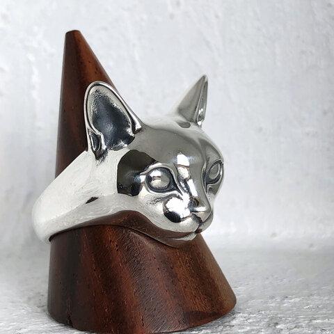 瞳孔がない standard cat 2020
