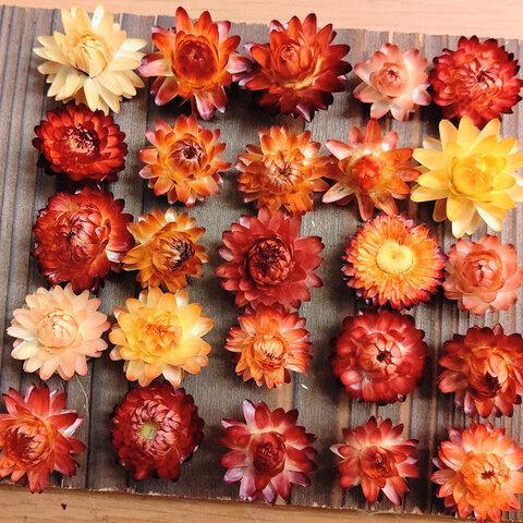 お得♪サイズ色々 オレンジ&黄色系ヘリクリサムヘッドのみ ドライフラワー花材セット