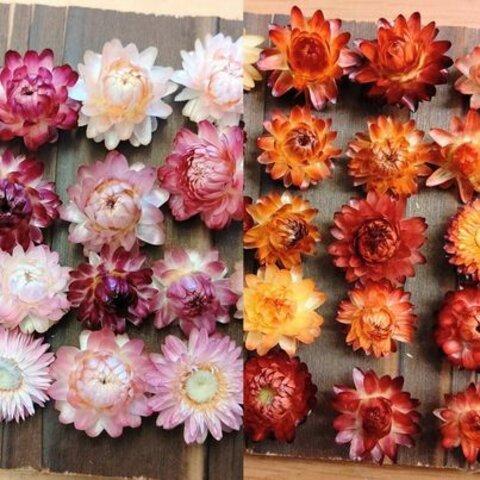 お得♪サイズ色々 オレンジ&黄色系+ピンク&パープル系ヘリクリサムヘッドのみ ドライフラワー花材セット