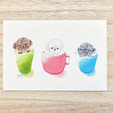 🐶透明水彩画「3匹のトイプードル 」 イラストポストカード 2枚セット トイプードル 犬 バースデーカード メッセージカード🐶