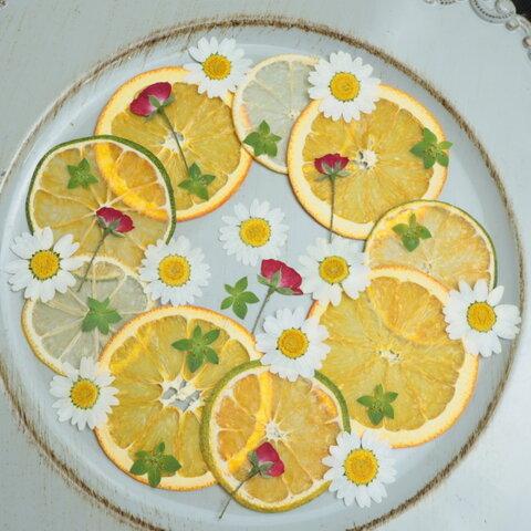 押しフルーツ柑橘系セット
