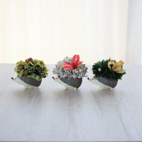 トコトコ…ハリネズミ『クリスマス準備、始まるよ!!』