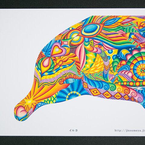 絵ポストカードNo.11「イルカ」【選べる3枚】