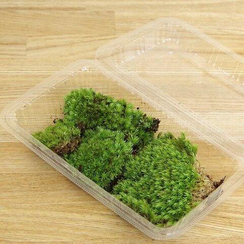 苔盆栽や苔テラリウム、盆栽作りなどに【ヤマゴケパック】