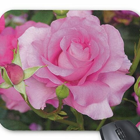ピンクのバラのマウスパッド:フォトパッド( 世界の花シリーズ ) (A:マヌウ・メイアン)