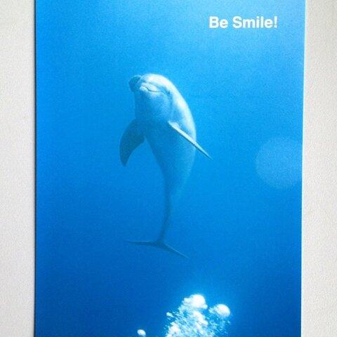 送料込み* イルカとウミガメのポストカード 3点セット *