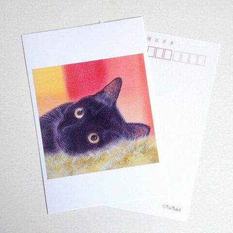 65ポストカード 黒猫 6枚セット