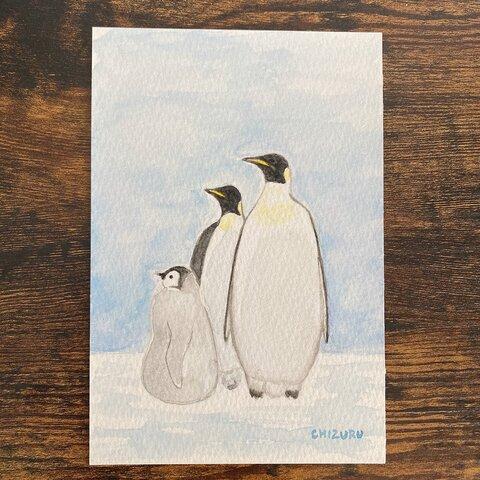 見つめる☆皇帝ペンギン【水彩画・原画】