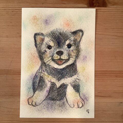 原画 黒柴の子犬