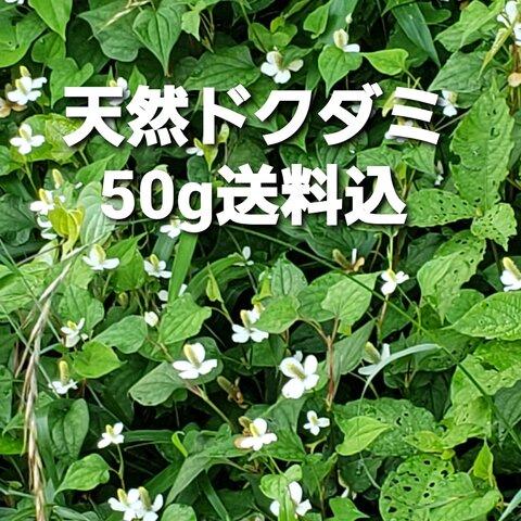 天然ドクダミ草50g乾燥葉茎花送料込み