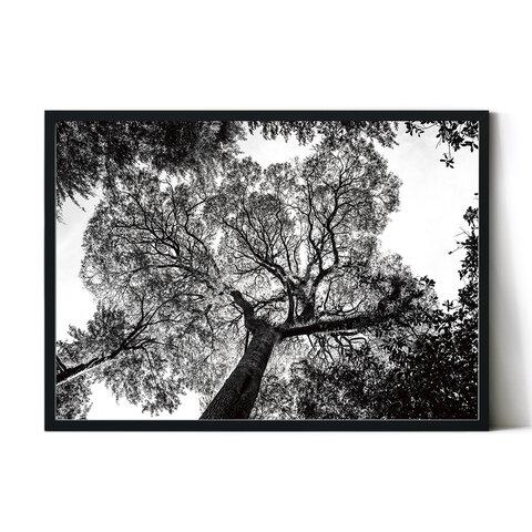 モノクロポスター【PHOTO_04】インテリアに森の風景写真ポスター。男前な白黒ポスター ランドスケープ
