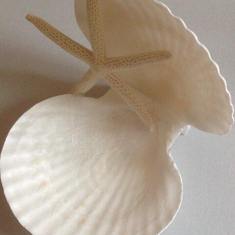 貝殻の器(SweetJewelオリジナルデザイン)送料別